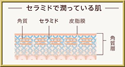 保湿効果成分1:天然ヒト型セラミド